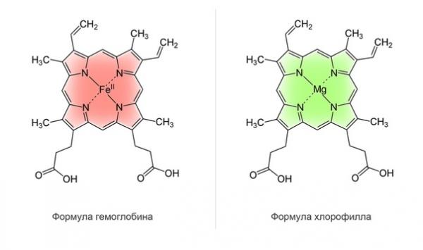Сравнение формулы хлорофилла и гемоглобина